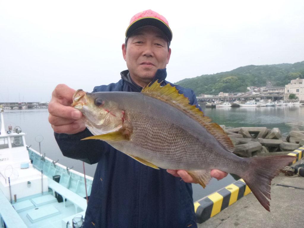 イサキ40cm