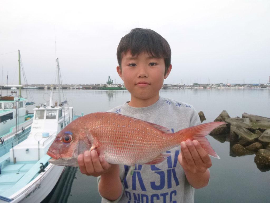 マダイを釣りました