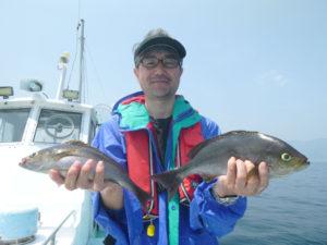 良型イサキ釣れました